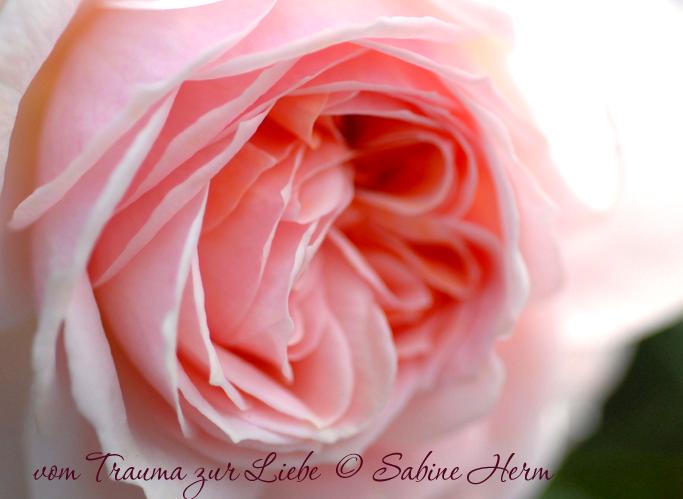 Für Frauen, die ihren Körper Lieben lernen wollen und sich nach sinnlichen, liebevollen Wohlgefühl sehnen