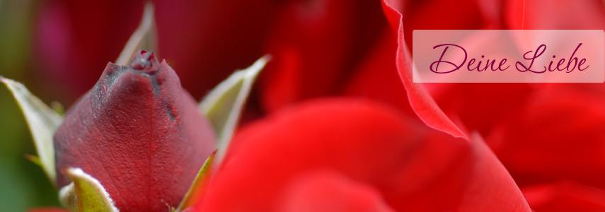 Erfüllt Frausein – dich für Liebe öffnen lernen