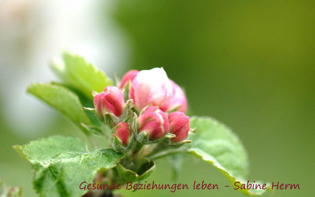 """5.April 19 – Widder Neumond – """"Neuanfang und die Kraft von tiefer Wahrheit"""""""